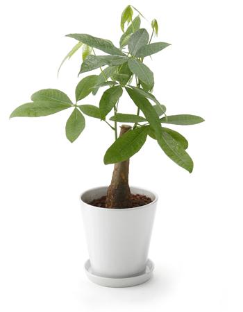 是非おすすめしたい育てやすい観葉植物4選をご紹介【初心者必見!】のサムネイル画像