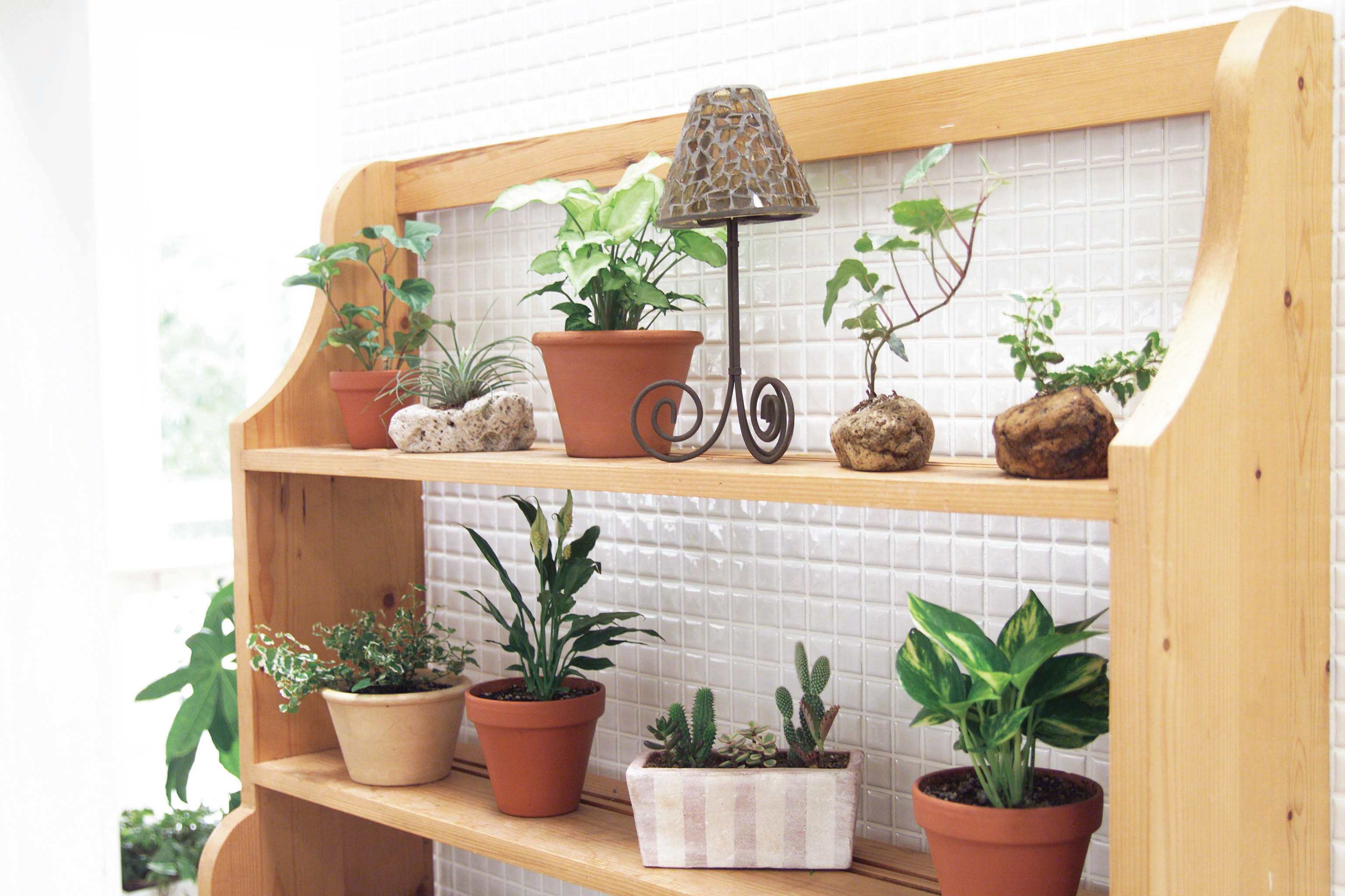 初心者必見!風水にきく観葉植物の基本をまとめてみました♡のサムネイル画像