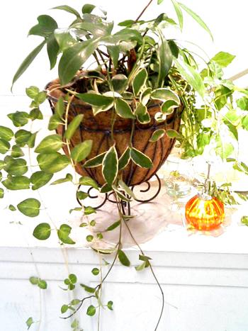 【インテリア】花以外の植物で作るハンギングが可愛い!【画像集】のサムネイル画像