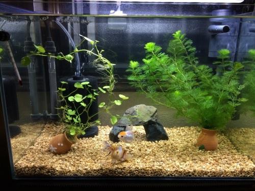 知っておきたい!水槽に華を添えるアクセサリーの選び方まとめのサムネイル画像