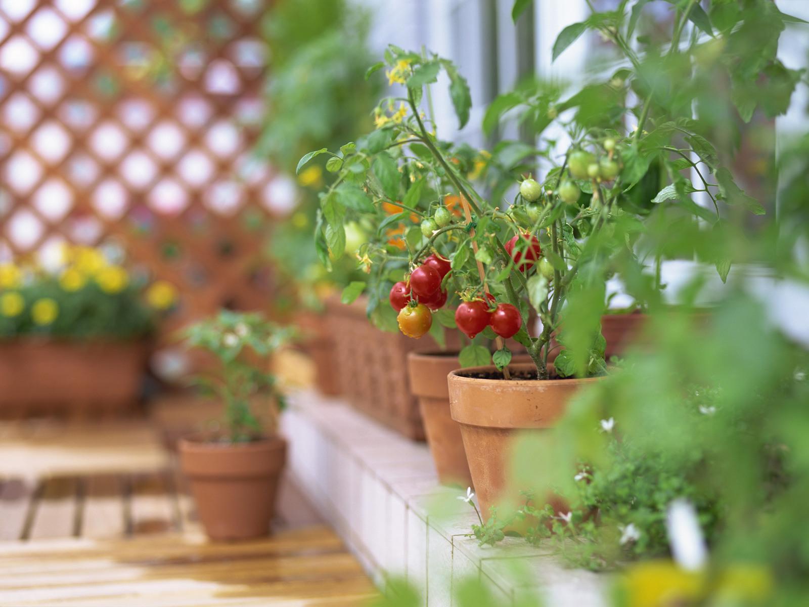 家庭菜園はマンションでも出来る!お手軽ベランダ家庭菜園をしよう★のサムネイル画像