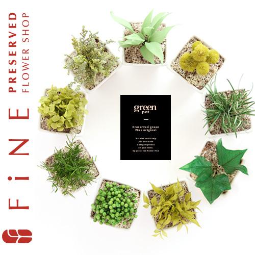 人気の観葉植物を誕生日プレゼントに♪縁起が良いらしい!?のサムネイル画像