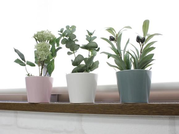 こじんまりとした姿が可愛い!人気の卓上に置ける観葉植物まとめ!のサムネイル画像