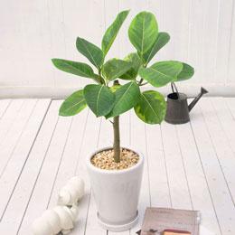 観葉植物を育てる上で必須の作業・植え替えってどういう方法なの?のサムネイル画像