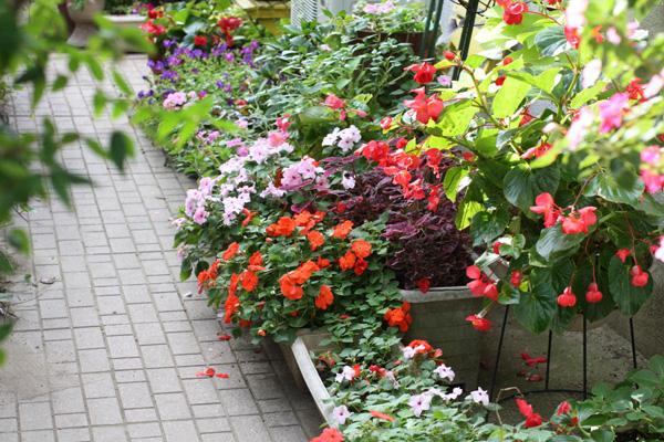【写真】秋から始めるガーデニング。花と球根、寄せ植えを紹介!のサムネイル画像