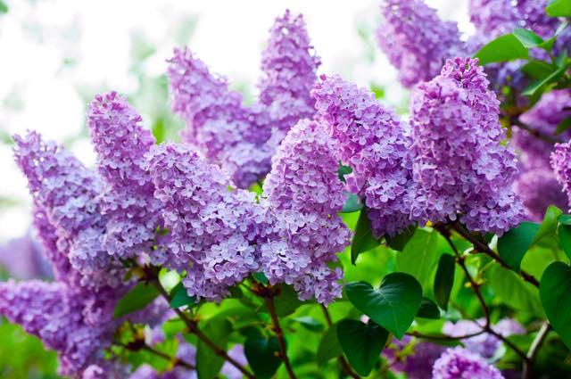 日が当たらなくても大丈夫!日陰でも育てられる耐陰性のある花3選!のサムネイル画像