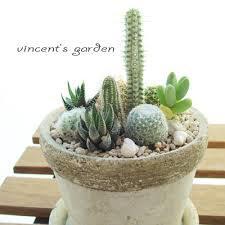 サボテンの寄せ植え大集合!1鉢でいろいろなサボテンが楽しめる!のサムネイル画像