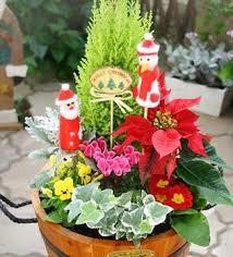 クリスマスにもピッタリ!寄せ植えガーデニングで季節を感じましょうのサムネイル画像