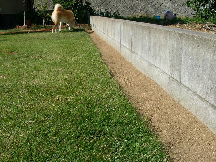 ガーデニングの土を選ぶ時のポイントは?どんな土を選べばいい?のサムネイル画像