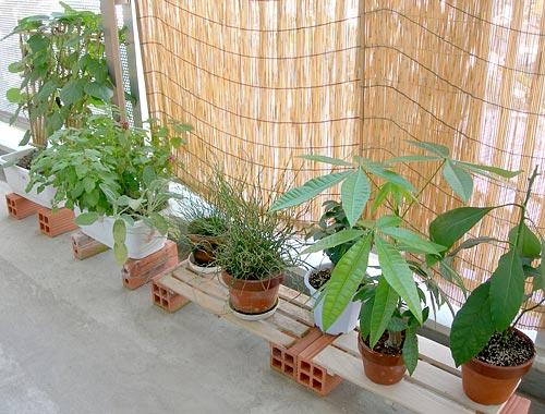 ベランダを緑で彩ろう!ベランダにオススメの観葉植物をご紹介!のサムネイル画像