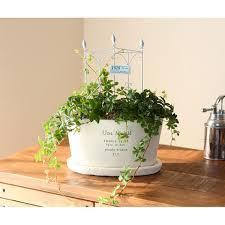 観葉植物はカントリー雑貨との相性抜群!2つをセットでご紹介!のサムネイル画像