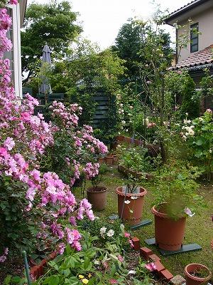 ナチュラルな庭づくり。ナチュラルガーデンは癒される活力源です。のサムネイル画像