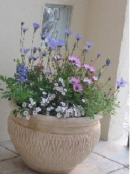 ガーデニングが楽しくなる!おしゃれでかっこいい陶器のプランターのサムネイル画像
