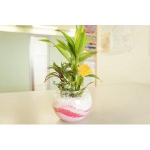 土が必要ない?!観葉植物のハイドロカルチャーって知ってる?のサムネイル画像