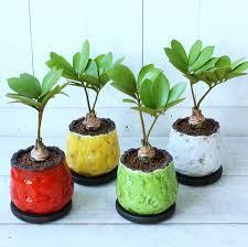 観葉植物を可愛いポットに植え替えて自分好みのインテリアに☆のサムネイル画像