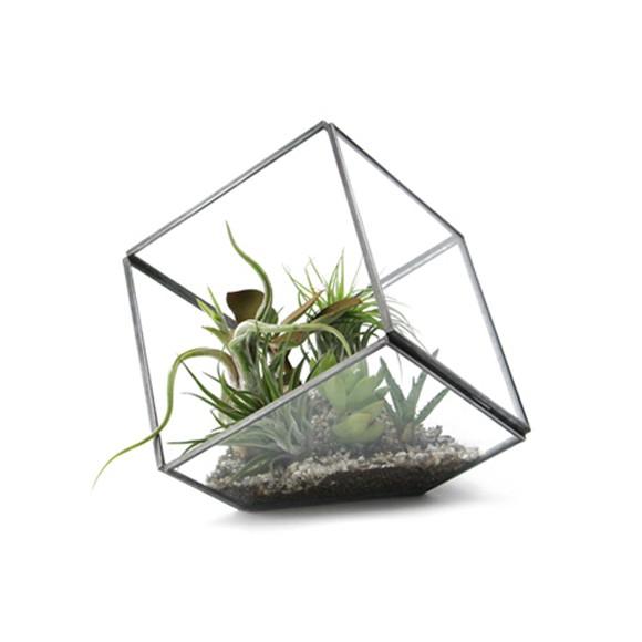見て楽しい作って楽しい!観葉植物をオシャレにガラス容器で飾ろう☆のサムネイル画像