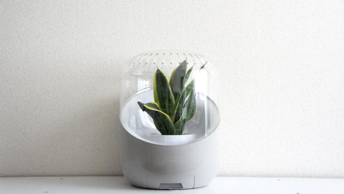 エコ☆植物の力で空気を綺麗に♪植物を飾って空気綺麗お部屋快適☆のサムネイル画像