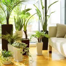 フェイクの観葉植物を取り入れて☆簡単にインテリアを楽しもう☆のサムネイル画像
