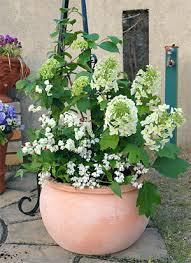【寄せ植えのコツ】玄関先やお庭でガーデニングを楽しみましょう☆のサムネイル画像
