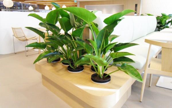 オフィスに緑を取り入れよう!オフィスに観葉植物を置くメリットは?のサムネイル画像