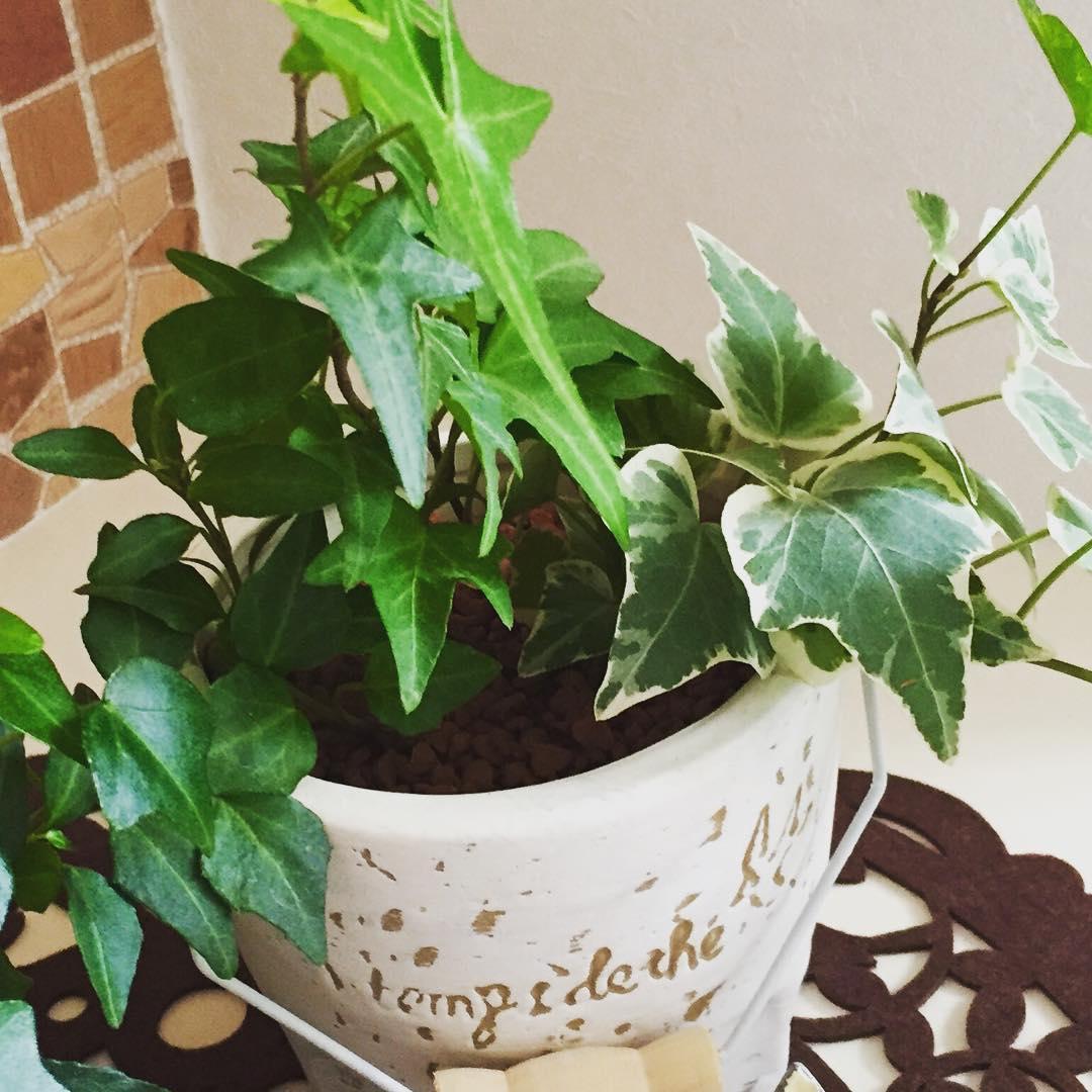 【適当に水、あげてない?】観葉植物の水やりで注意しておきたいことのサムネイル画像