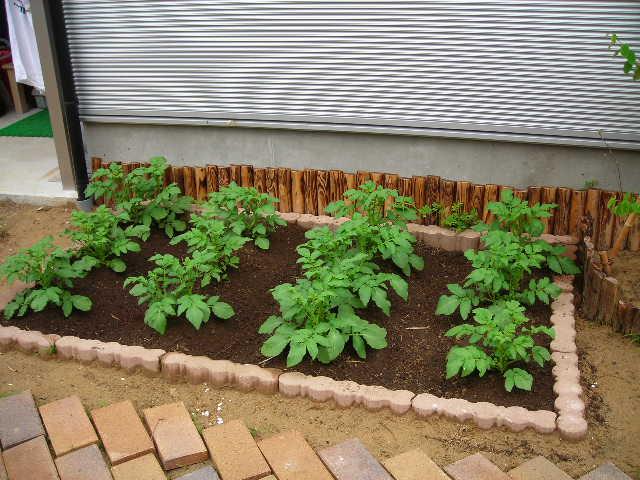 はじめてでも安心?家庭菜園をお手伝いする便利グッズがすごい!のサムネイル画像