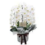 新築祝いとして花束を贈りたい…どんな花束をいつ贈るのが良いの?のサムネイル画像