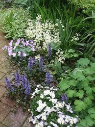 日陰のガーデニングを諦めていませんか?日陰でも育つ植物をご紹介!のサムネイル画像