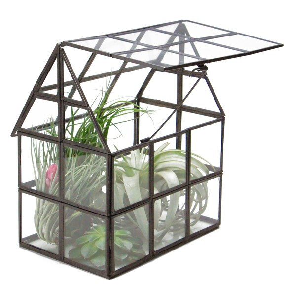 見ているだけでとっても癒される!植物をガラスケースで育てよう!のサムネイル画像