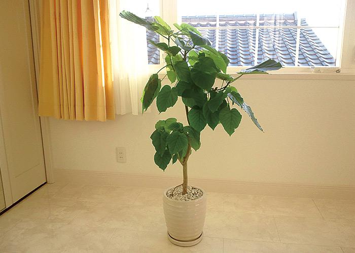 室内で観葉植物を育てたい!でもどんな観葉植物が室内向きなの?のサムネイル画像