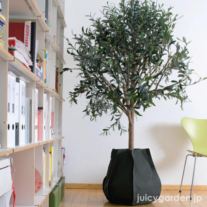 観葉植物や植物 より美しく育てるのに欠かせない鉢の選び方のサムネイル画像