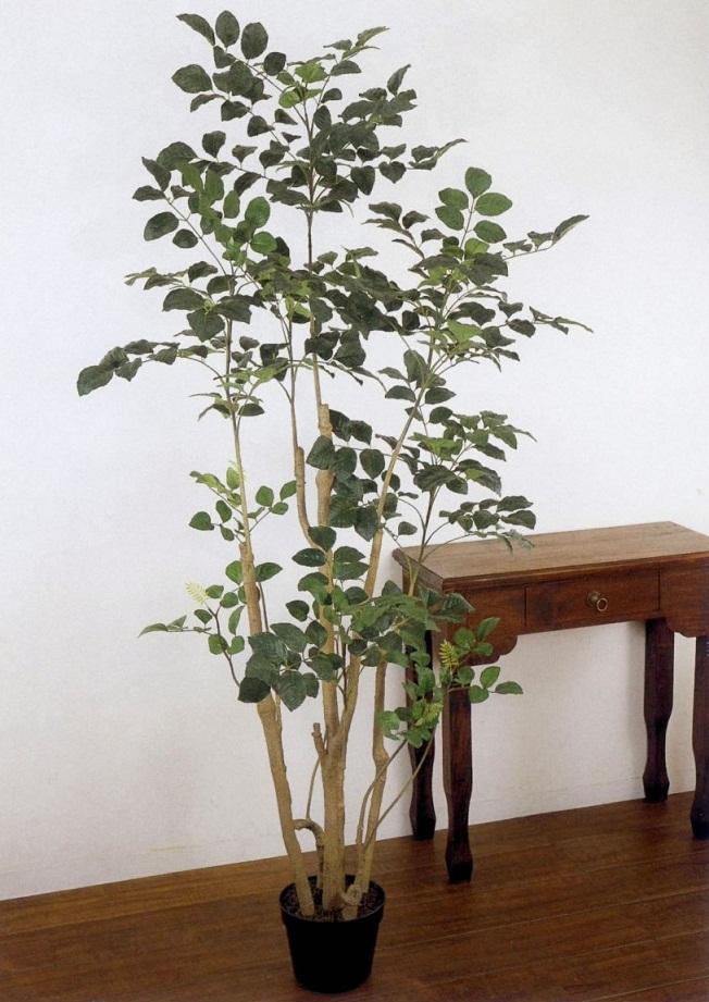 観葉植物や植物、造花を購入できるお店、ウェブサイトはどれ?のサムネイル画像