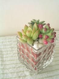 多肉植物の植え方を覚えて素敵にインテリアを楽しみましょう☆のサムネイル画像