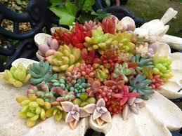 多肉植物の苗とブリキの鉢をご紹介!冬のガーデニングにおススメのサムネイル画像