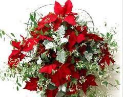 寄せ植えならこれがおススメ!クリスマス仕立てのハンギングをご紹介のサムネイル画像