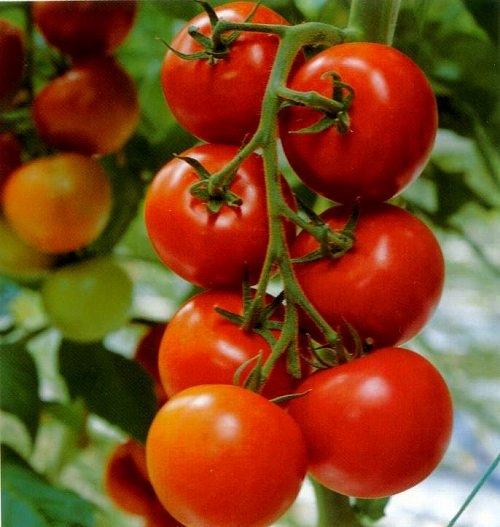 家庭菜園で野菜を作ります。野菜の栽培方法を書いていきます!のサムネイル画像