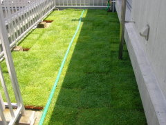 マンション住まいだけど芝生の庭に憧れる!ベランダに芝生はOK?のサムネイル画像