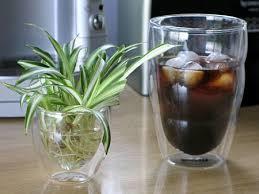 水栽培で観葉植物を育ててみませんか?土不要で管理が簡単☆のサムネイル画像