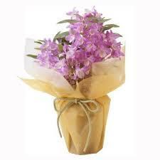 鉢植えの花はどう管理する?冬場でもギフトにおススメのお花☆のサムネイル画像