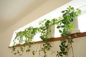 室内にグリーンを☆観葉植物で部屋のインテリアにグリーンを添えてのサムネイル画像