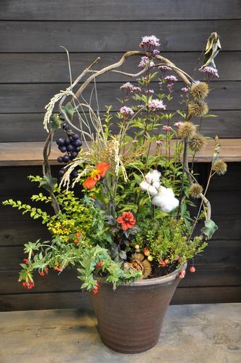 秋の風景を楽しむ!【初心者でもOK】寄せ植えで秋のガーデニング作りのサムネイル画像