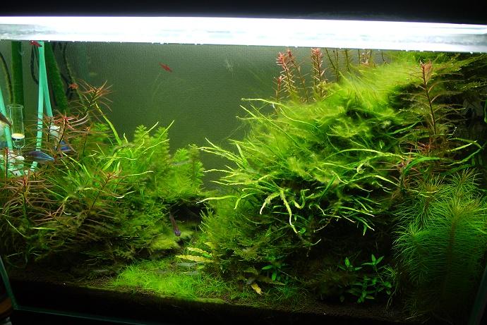 アクアリウムなどでは、水草のレイアウトは、とても重要になります!のサムネイル画像