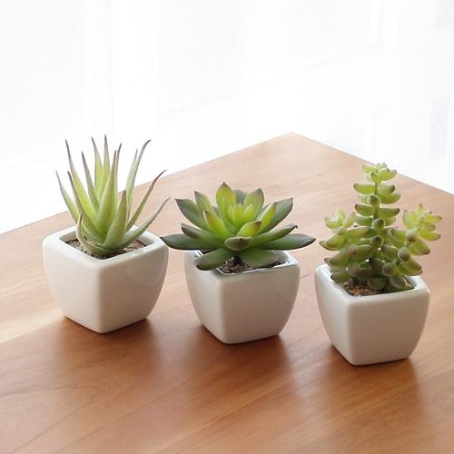 【観葉植物でおしゃれに消臭】嫌な臭いのない素敵な部屋作りのサムネイル画像