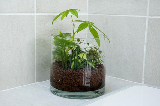 観葉植物をガラス容器で?!観葉植物をおしゃれに育てよう!のサムネイル画像
