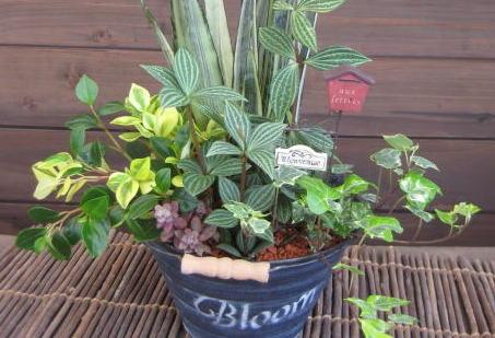 【寄せ植え】観葉植物の寄せ植えの楽しみ方、上手な寄せ植え方のサムネイル画像