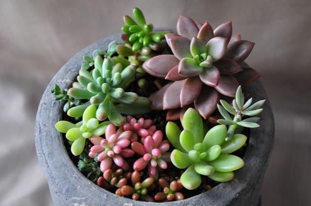 とっても可愛い多肉植物!土の選び方は?植え替えの方法は?のサムネイル画像