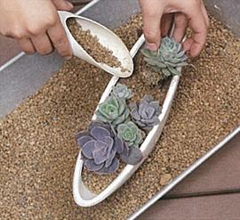 多肉植物を元気に育てるために!多肉植物を定期的に植え替えしよう!のサムネイル画像