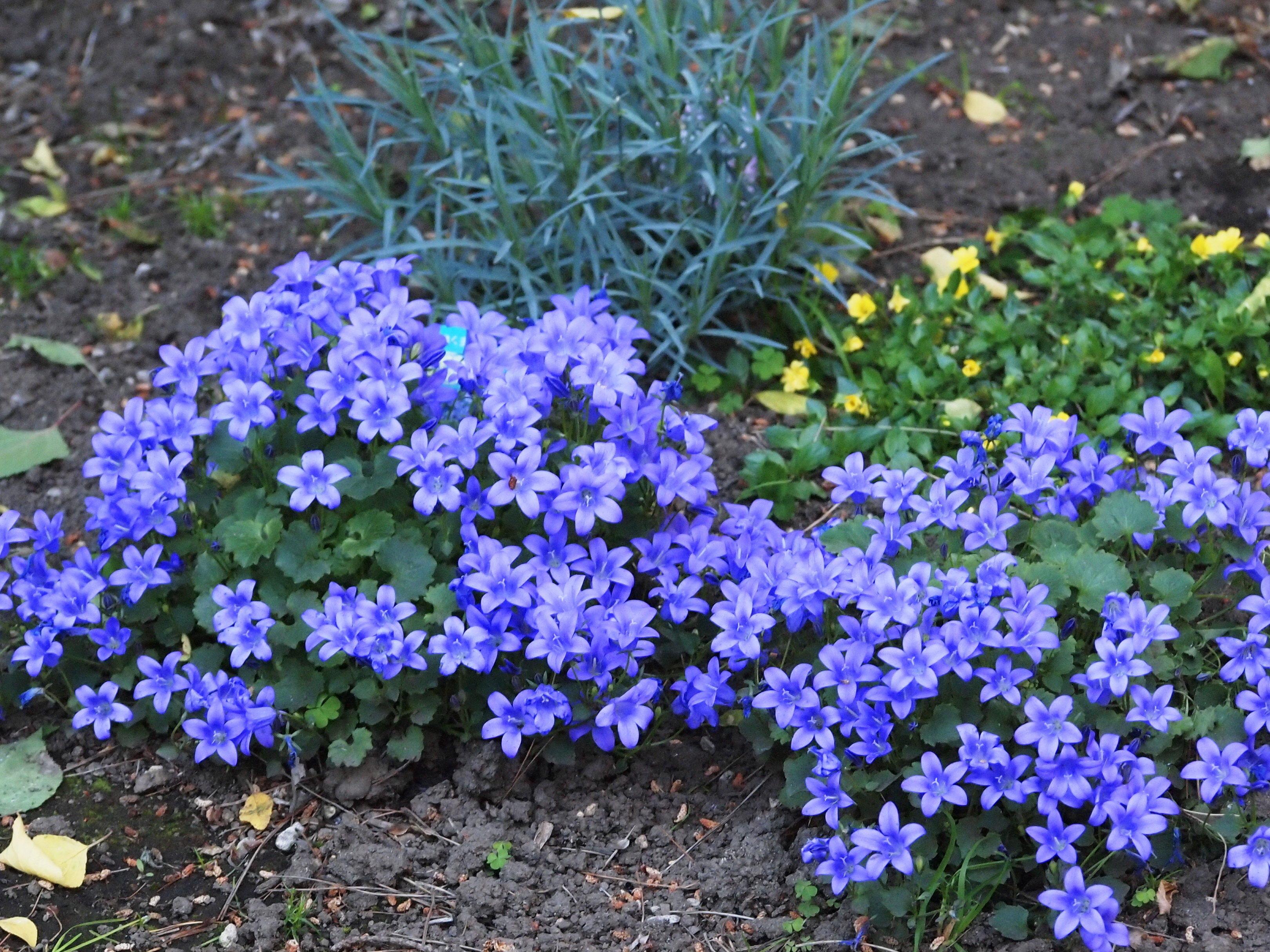 植えたままでもok!お庭に地植えする方法と適したお花の紹介のサムネイル画像
