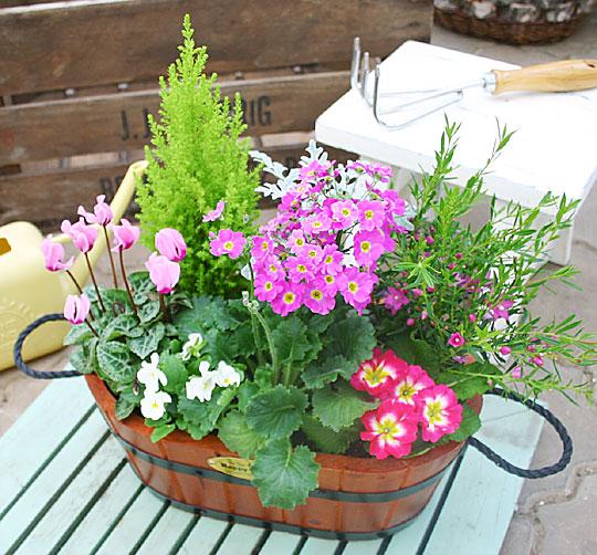 お庭を素敵な寄せ植えで飾りましょう!利用方法を紹介します!のサムネイル画像