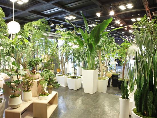 人気の観葉植物 安い価格で購入できるお店は?おススメのお店は?のサムネイル画像